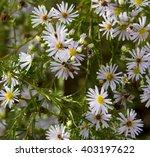 Pretty Lilac Mauve Flowers Of...