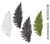 fern  isolated elements for... | Shutterstock .eps vector #403253158