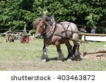 Ardennes Horse On Green Grass