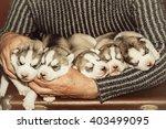 five puppies siberian husky.... | Shutterstock . vector #403499095