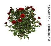 3d Illustration Of A Red Rose...