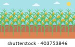 Background Of Corn Field.