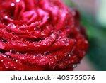 Rose Bud Macro Drop