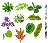 set of stylized tropical plants ... | Shutterstock .eps vector #403811602