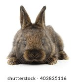 Isolated Image Of A Brown Bunn...