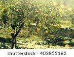 lemon tree. | Shutterstock . vector #403855162
