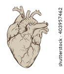 hand drawn line art ... | Shutterstock .eps vector #403957462