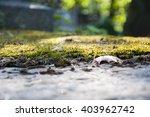 Natural Closeup Background Of...