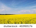 yellow rapeseed flowers on... | Shutterstock . vector #403985176