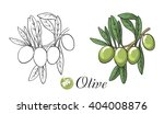 olive branch with olives | Shutterstock .eps vector #404008876