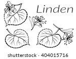 set of plant pictograms  linden ...   Shutterstock . vector #404015716