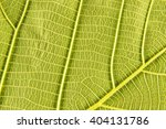 leaf fibers background | Shutterstock . vector #404131786
