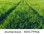 Young Green Plants On A Field