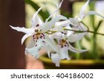 beautiful orchid flowers in a... | Shutterstock . vector #404186002