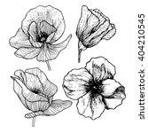engraving poppy set. hand drawn ... | Shutterstock .eps vector #404210545