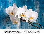 white orchid flower on blue... | Shutterstock . vector #404223676