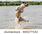 Summer Fun In Water With A Dog...