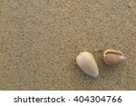 fossil shell on the sand beach  ... | Shutterstock . vector #404304766