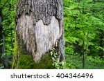 A Large Heart Carved In A Tree...