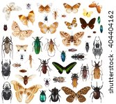 set of insects on white... | Shutterstock . vector #404404162