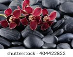 Branch Red Orchid On Pebbles ...