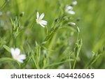 flowers   forest flowers   Shutterstock . vector #404426065