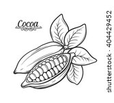 hand drawn cocoa bean.  vector ... | Shutterstock .eps vector #404429452