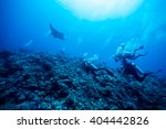 diver swimming with manta ray | Shutterstock . vector #404442826