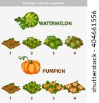 Stage Of Growth Vegetables 5 1...