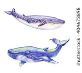 watercolor blue whales. hand...   Shutterstock . vector #404673898