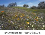 Wildflowers Fields  California