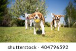 Stock photo group of dogs playing in the park 404796592
