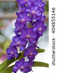 Small photo of Purple vanda orchid, natural garden background.