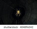 dangerous spider web background ... | Shutterstock . vector #404896342