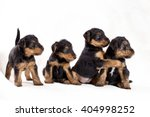 Stock photo playing cute puppies on white background 404998252