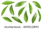 Green Citrus Leaves  Isolated...