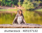 closeup of the pensive monkey... | Shutterstock . vector #405157132