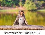 closeup of the pensive monkey... | Shutterstock . vector #405157132