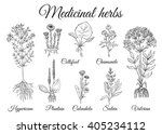 set of medicinal pharmacy herbs.... | Shutterstock .eps vector #405234112