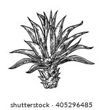 cactus agave. vintage black... | Shutterstock .eps vector #405296485