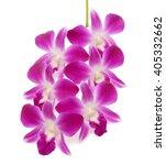 beautiful purple dendrobium... | Shutterstock . vector #405332662