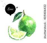 watercolor hand drawn lime.... | Shutterstock . vector #405406432