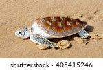 hawks bill sea turtle release... | Shutterstock . vector #405415246