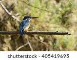 common kingfisher | Shutterstock . vector #405419695