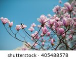 pink magnolia flowers  on the... | Shutterstock . vector #405488578