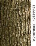 Oak Tree Bark.