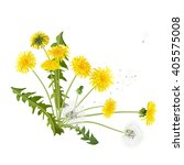 spring wildflowers. young and... | Shutterstock . vector #405575008