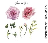 flowers and leaves  watercolor  ... | Shutterstock . vector #405635422