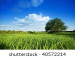 tree in the rural - stock photo
