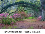 Live Oak Trees Arching Over A...